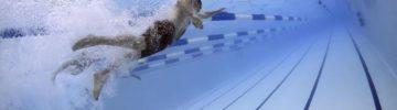 Где в районе Лосиноостровский планируется построить ФОК с бассейном