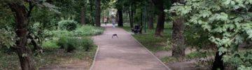 В Подмосковье завершили программу комплексного благоустройства дворов