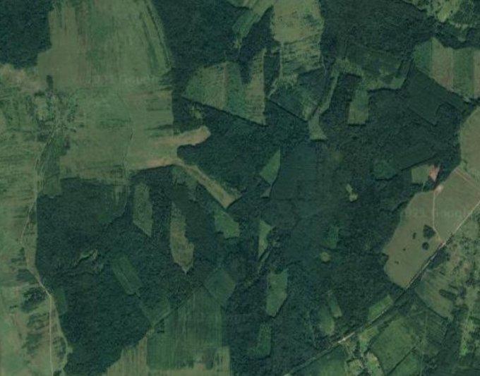 Кто много лет вырубал «незаметно» для власти леса в Смоленской области