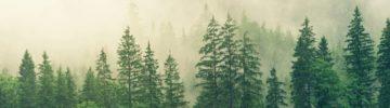 «Алмазы Анабара» восстановят 105 гектаров леса в Якутии