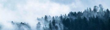 «Газпром» восстановит 70 гектаров леса в Томской области